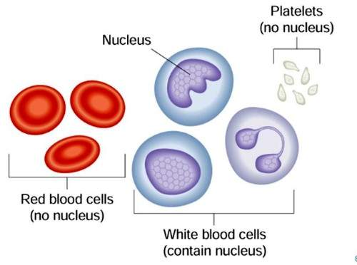 Types of Blood Cells