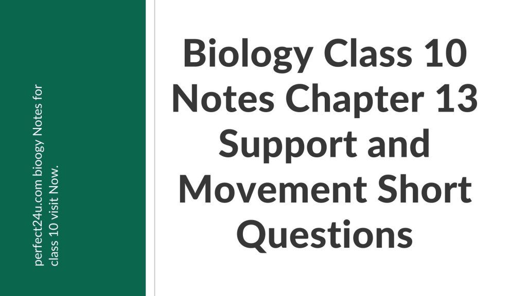 Biology Class 10 Notes Chapter 13 Support and Movement Short Questions