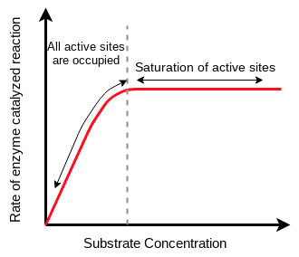 Effect of Concentration of Substrate on Enzyme Activity