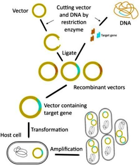 Write a comprehensive note on the procedure of recombinant DNA technology