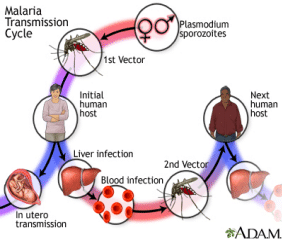 When a female mosquito pierces the skin with her mouthparts, she injects a small amount of saliva to prevent the blood from clotting in her food canal.