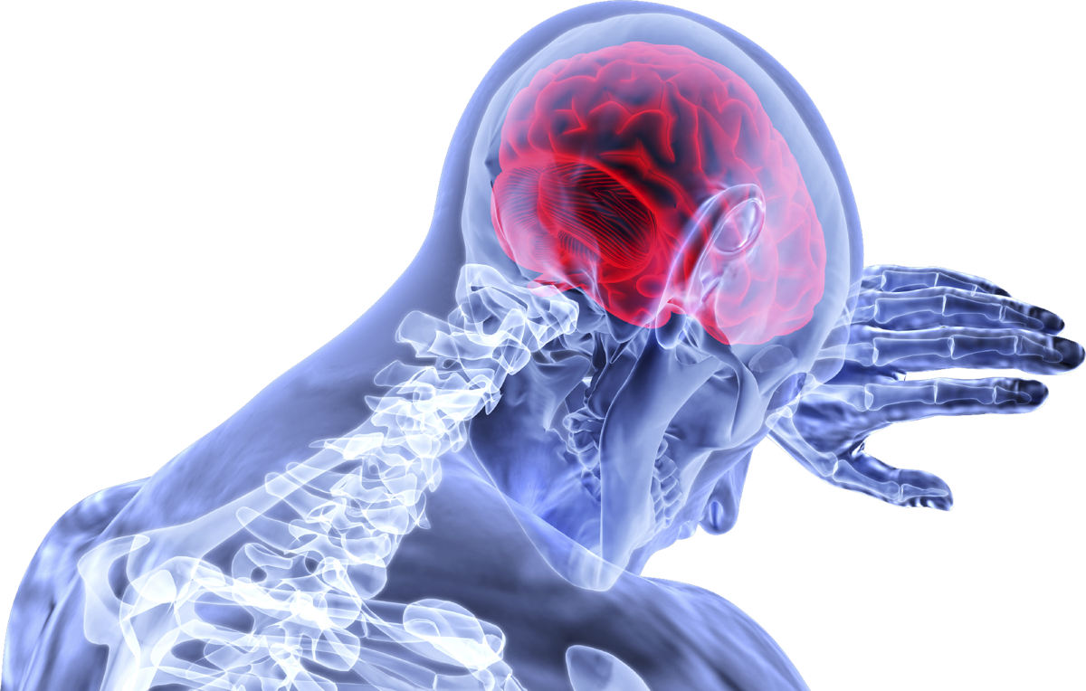 wave activity in mini brains may help scientists analyze neurological disorders 1