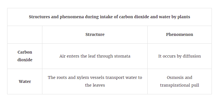 Plants get the carbon dioxide they need from the air through their leaves. It moves by diffusion through small holes in the underside of the leaf called stomata . Guard cells control the size of the stomata so that the leaf does not lose too much water in hot, windy or dry conditions.