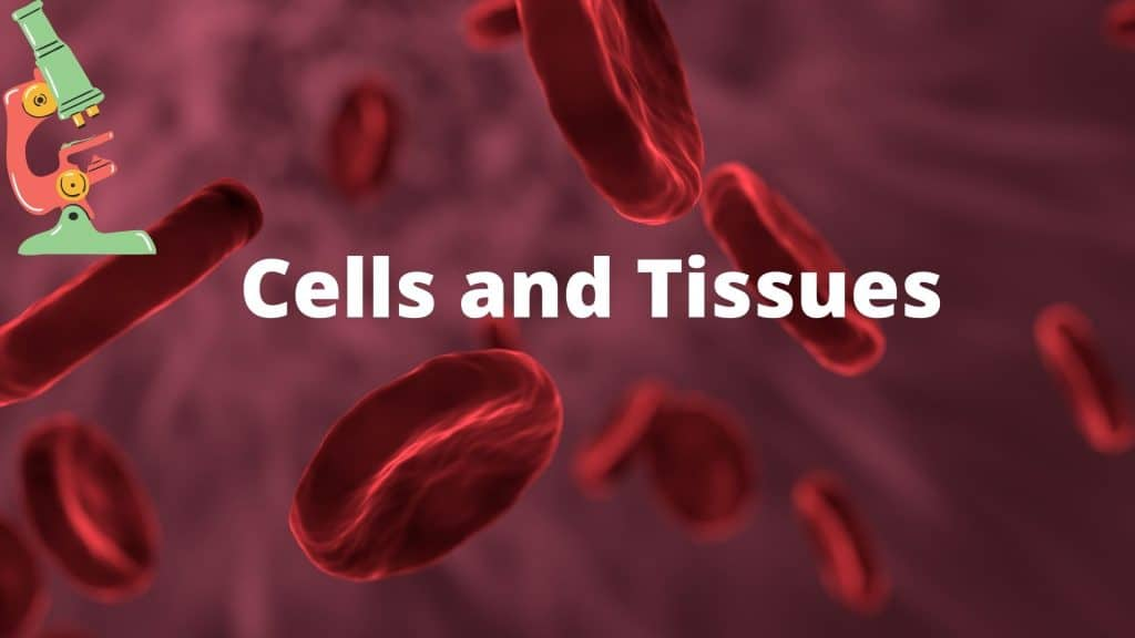 Biology Chapter number 6 cells and tissues.