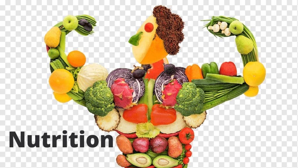 Chapter #8 Nutrition biology clas 9th notes for punjab board.